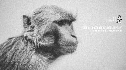 Afbeelding › Eleven Monkeys